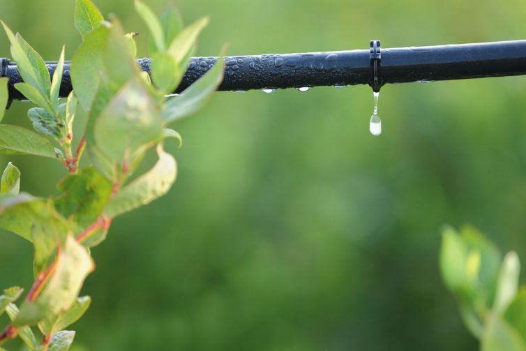 Drip Irrigation System Close Up